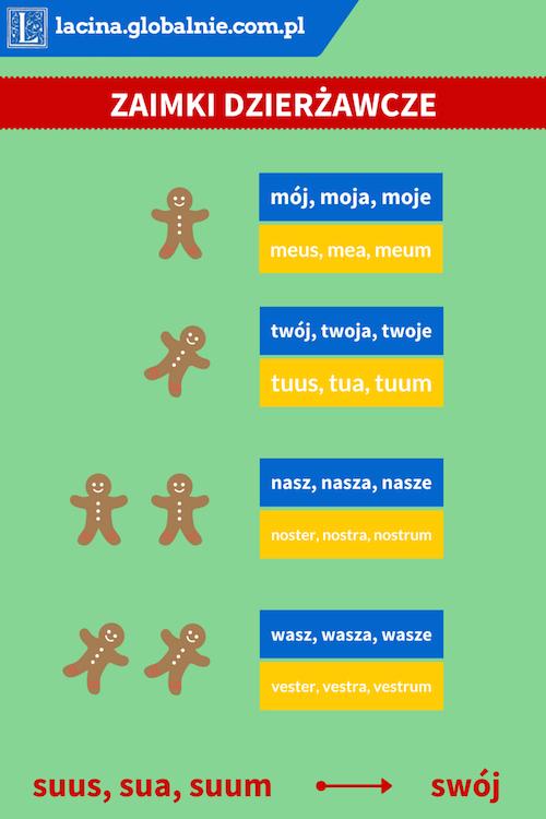 Zaimki dzierżawcze łacina